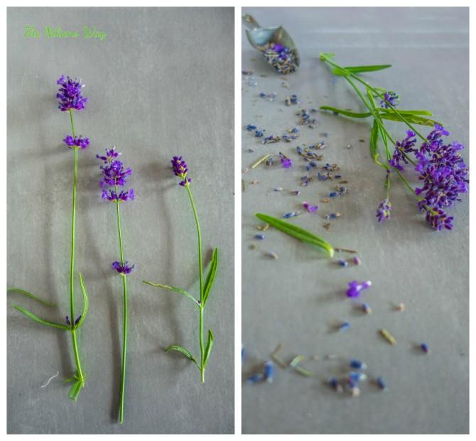 lavender collge
